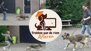 Hond leren wandelen zonder trekken - Hond trekt aan de riem afleren