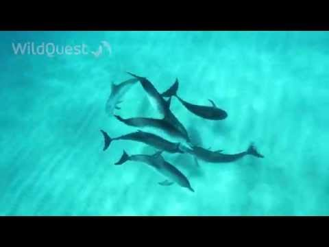 Dolphin Tales 3/2014 - Underwater with Wild Dolphins