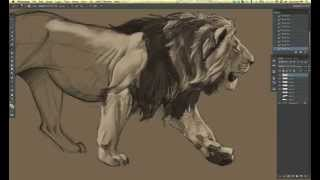 Time lapse lion drawing in Photoshop CS6