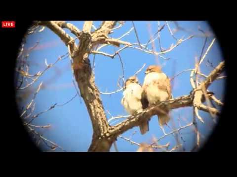 03092014_PM_Karels/BOGette Cam_Ez and BR in Kissing Tree 2