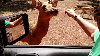 Drive Thru Safari Near Texarkana
