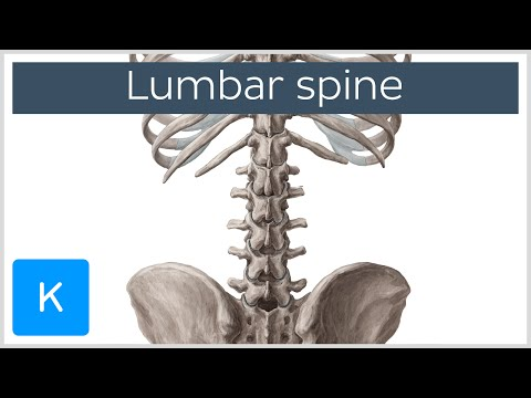 Anatomy of lumbar spine