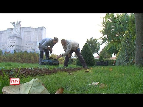 Luçon : les plantations d'automne des espaces verts
