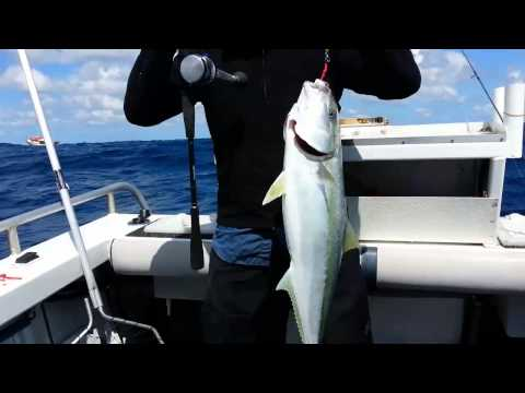 Sydney Offshore Kingfish
