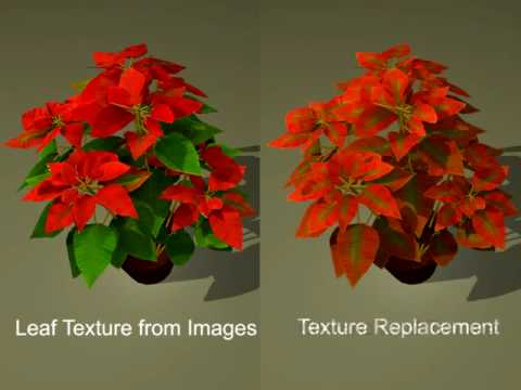 image-based plants modeling