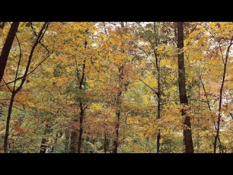 Fleet Foxes - Ragged Wood