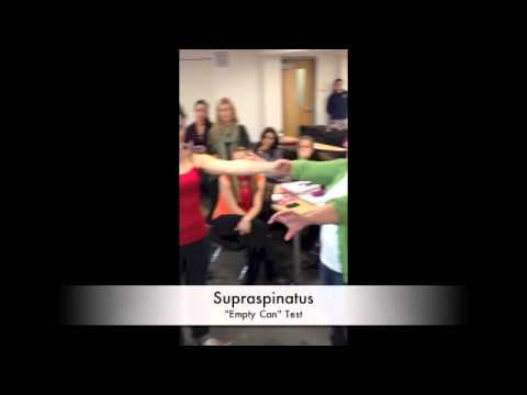 Supraspinatus Manual Muscle Test Manual Muscle Test For
