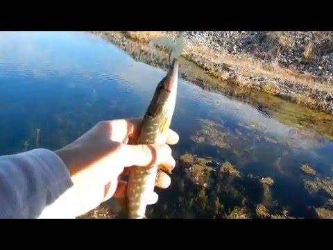 избербаш рыбалка