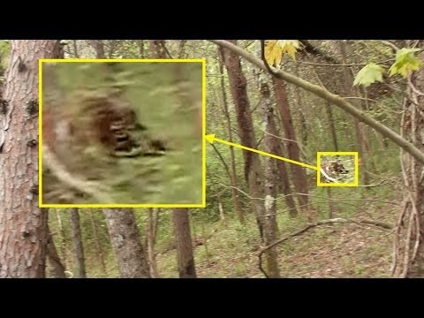 Top 7 Reasons to Believe in Bigfoot And That it Really Exist