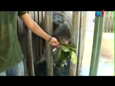 BORA - Saving the Sumatran Rhino in Sabah.mp4