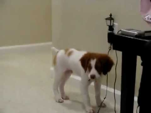 funny videos 2012 Very nice puppy