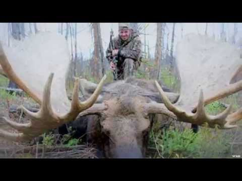 World record moose weight
