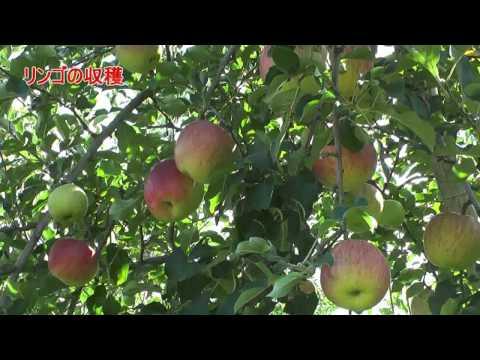 高山市 「ふるさと農村体験モニターツアー」 ~秋の恵みを満喫~