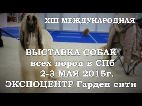 """XIII Международная выставка собак всех пород Гран При «Весенний Петербург 2015"""""""