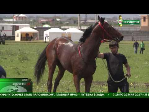 В Ингушетии прошел турнир по конным скачкам .