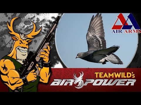 Airgun Hunting - South African Pigeon Pest Control!