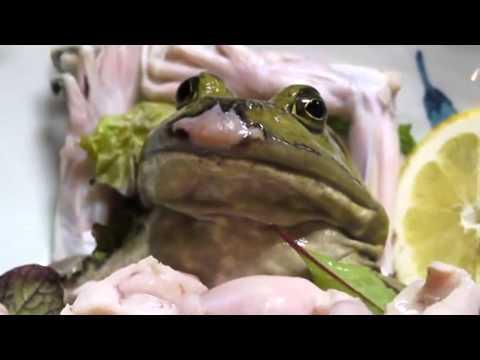 TOP 4:Las Comidas Animales Mas Grotescas del Mundo (Segun Alexandro Nash)