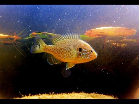 Unterwasserwelt Impressionen Aus Unserem Gartenteich