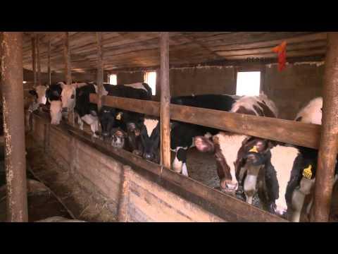 Семейные животноводческие фермы региона получают гранты