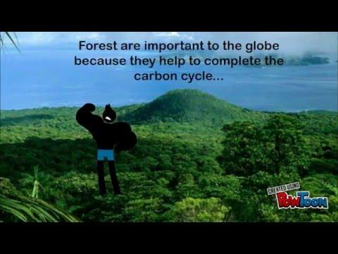 Deforestation's Effect On the Globe