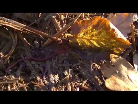 comment trouver des vers de terre en hiver