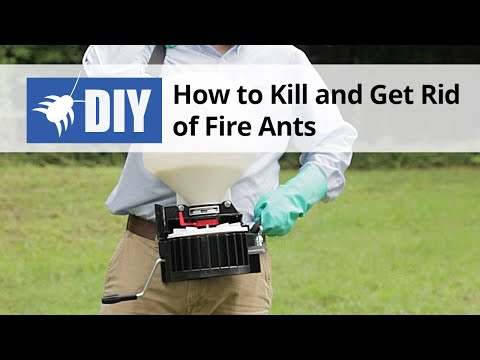 how to kill get rid of fire ants youtube. Black Bedroom Furniture Sets. Home Design Ideas