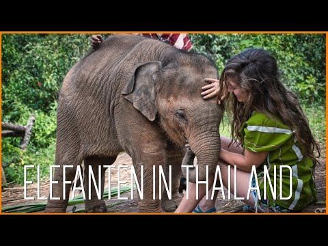 Elefant Sanctuary, Vegan Kochkurs   Chiang Mai   Thailand Vlog   Episode 5