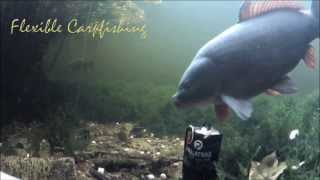 Flexible Carpfishing Go Pallatrax amazing video