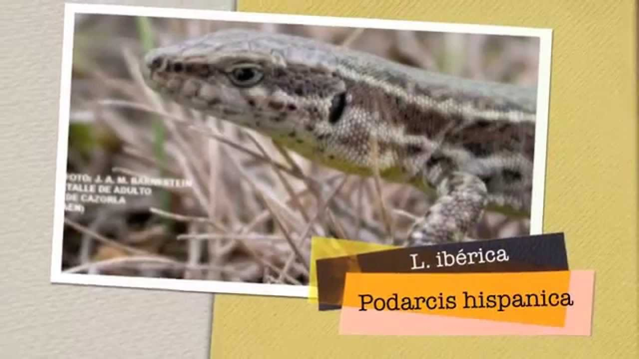 fauna iberica asturias: