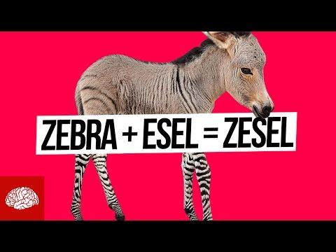 Verrückte Tierkreuzungen aus aller Welt