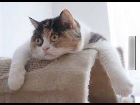 Funny animals compilation 2014- 2015.............Clip hài động vật mới nhất! | hai dong vat