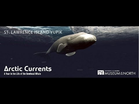Arctic Currents: A Year in the Life of the Bowhead Whale (Yupik)