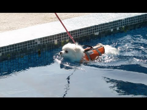 Cute doggies learn to SWIM!
