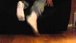 Sox Master - Kiss my socks - Scally socks