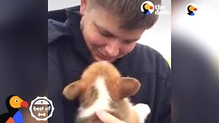 PUPPY SURPRISES: People Get the Most Amazing Surprise | The Dodo Best Of