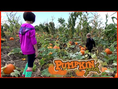Lone Pine Farm Halloween Pumpkin Patch - Mining, Pumpkin Hunting, Goats and More!