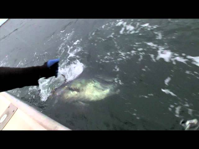 OnTheWaterTV   North Lake Charters