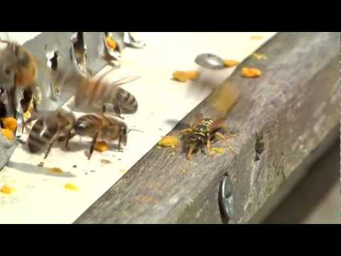 Winterizing Bee Hives Part 2 - Spring Inspection and Feeding