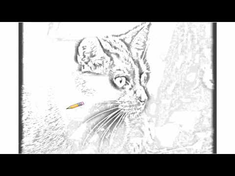 Auto Draw 2: Black Cat Profile Video