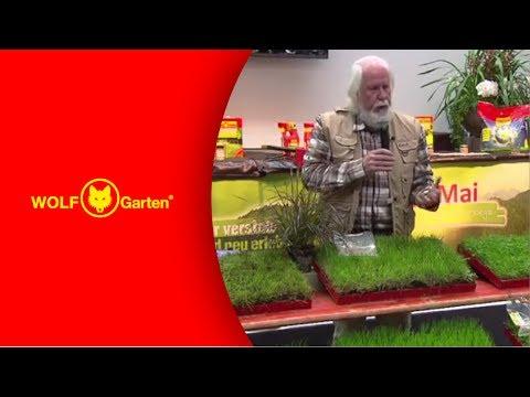 WOLF-Garten Rasenberatung Teil 2: Welche Rasenmischung Ist Für Welchen Zweck Geeignet?