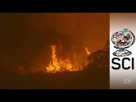 Australia's Fire Vortex: The Catastrophic Mix Of Bushfire And Tornado