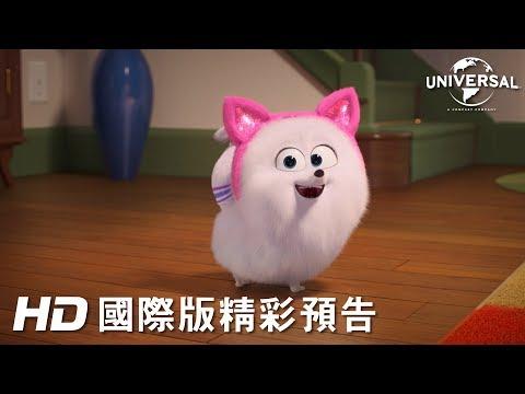 【寵物當家2】貓咪教學篇 - 今年暑假 歡樂登場