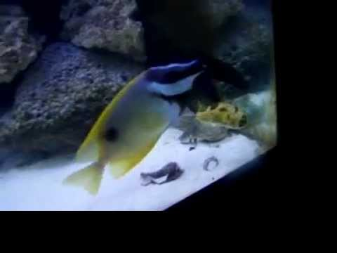 75 gallon saltwater tank Video