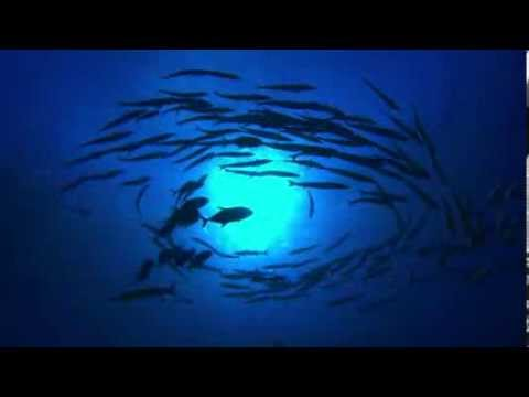 Climate & Reef Documentary - Earth Hour Blue
