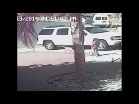 Brave cat Saves kid from pitbull attack