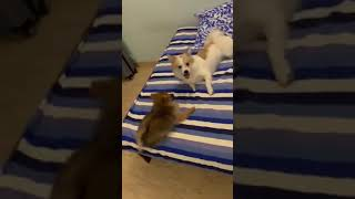 Cutes dogs | Cutest dog in the world | Cute dogs clips
