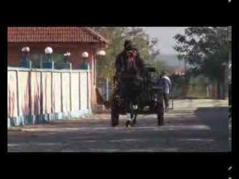 Cai de vanzare rasa friesian - Iapa Wianka - Sirbu Costel (Comandantul)