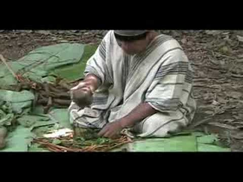 Ayahuasca preparation in Manu National Park '07