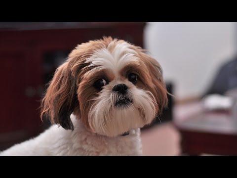 ТОП-20 самых популярных пород собак в мире