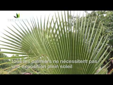 Plantes d 39 ext rieur r sistant au froid page 2 10 all for Palmier d exterieur resistant au froid